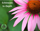 Echinacea In-Depth